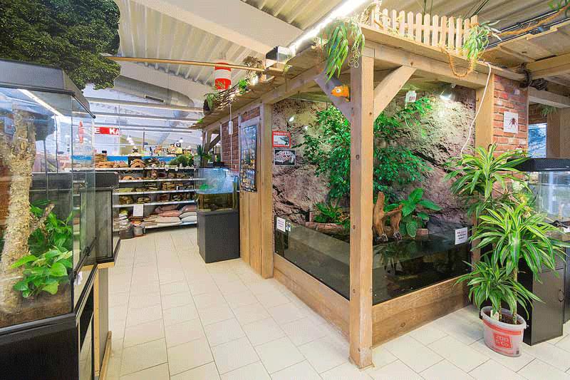 Terraristik - Zoo Knutzen in Kiel