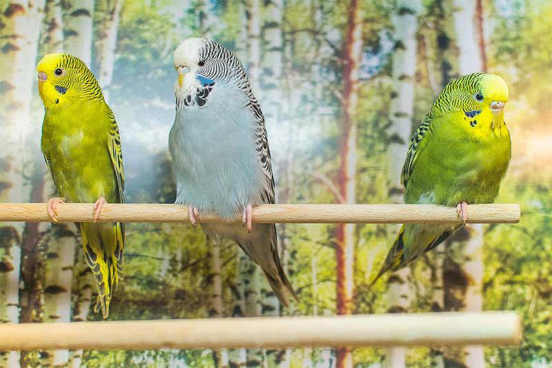 Vogelabteilung - Zoo Knutzen in Kiel
